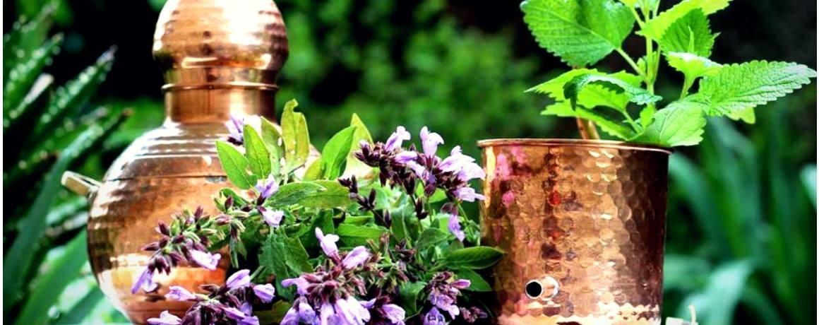 Rincon medicinal2